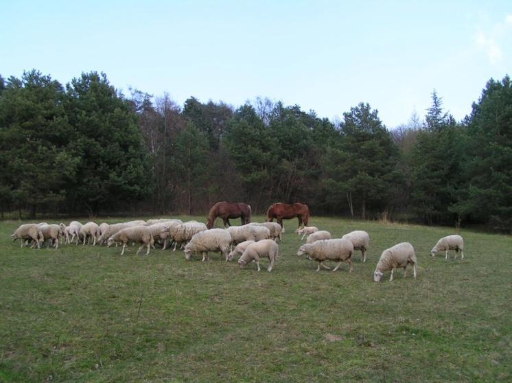bryndzové halušky - Biofarma Príroda Stupava