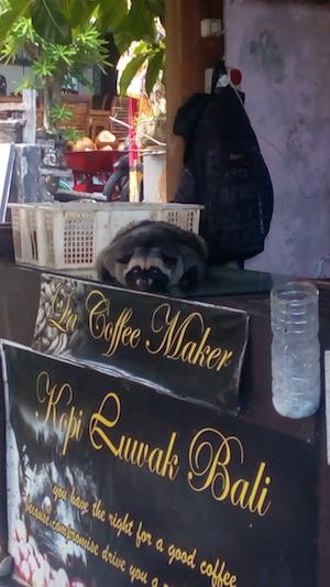 Cibetková káva - Bali, Indonézia kuchyňa